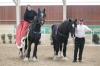 Brickell Vera (Brickell John Little) a Gravel Pit Harvey (Decoy Prince Charming ) Shire horse