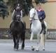 Václav Dufek se svými koňmi